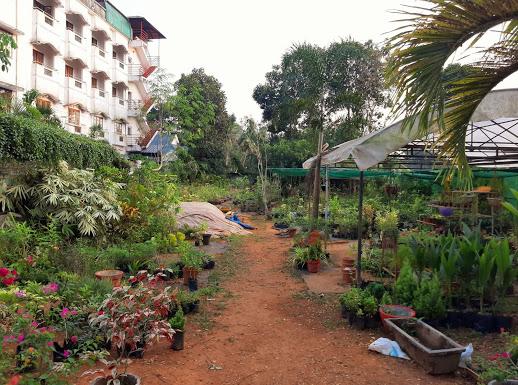 Rose Nursery & Gardens, PLANT NURSERIES,  service in Mannanam, Kottayam
