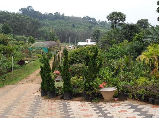 Ezhuvelil Gardens, PLANT NURSERIES,  service in Kottayam, Kottayam