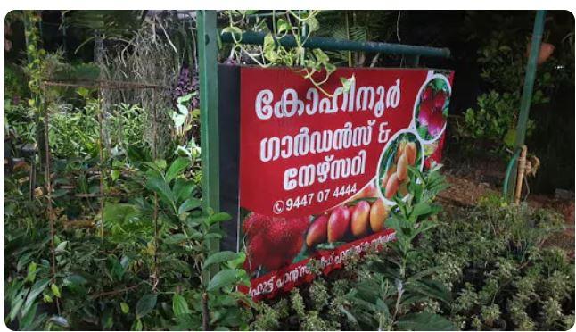Kohinoor Gardens, PLANT NURSERIES,  service in Alappuzha, Alappuzha