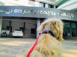 District Veterinary Centre, VETERINARY & POULTRY,  service in Kodimatha, Kottayam