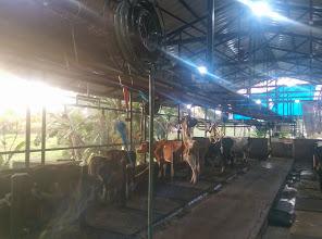 Kuzhuppil Dairy Farm, MILK,  service in Kottayam, Kottayam