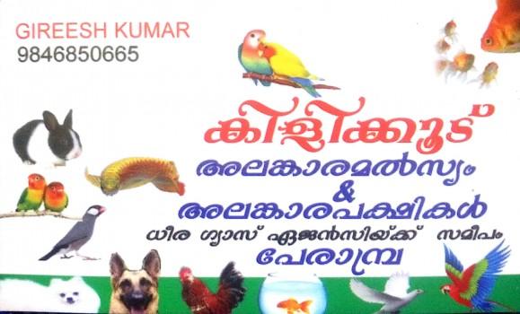 KILLI KOOD, PETS & AQUARIUM,  service in perambra, Kozhikode