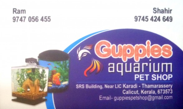 GUPPIES Aquarium, PETS & AQUARIUM,  service in Thamarassery, Kozhikode