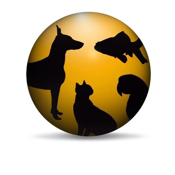 Pets, Aquarium, Foods and Accessories